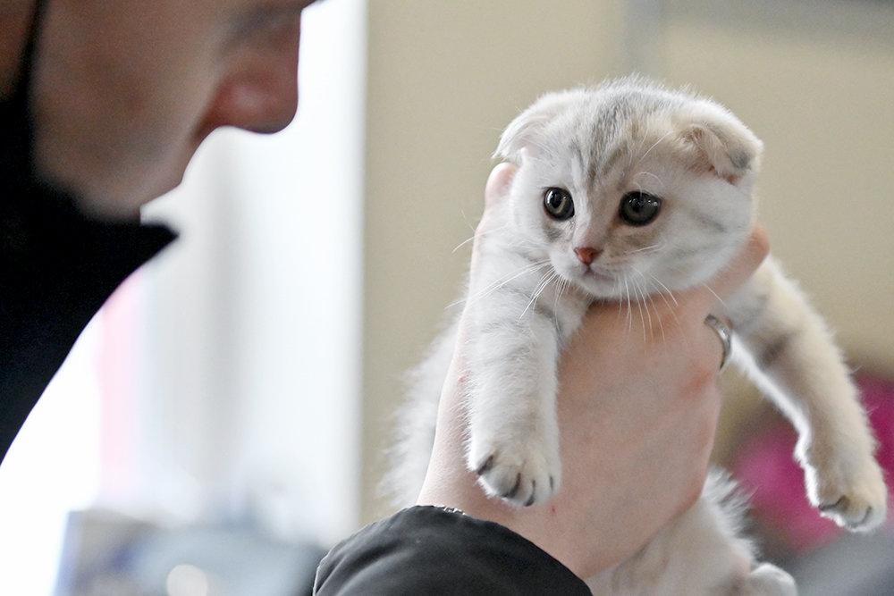 В Госдуму внесены поправки о штрафах за жестокое обращение с животными