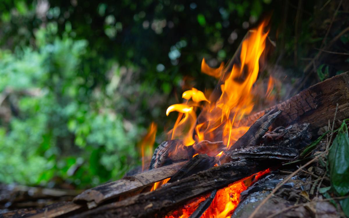 Ситуацию с лесными пожарами в стране взял под личный контроль Владимир Путин