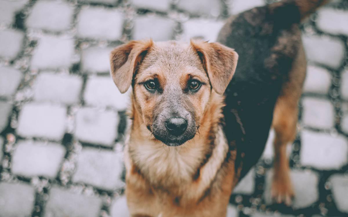 Правительство Югры утвердило концепцию обращения с животными в регионе. Согласно документу к концу декабря будут построены приюты для безнадзорных собак и кошек в пяти населенных пунктах округа: Мегионе, Радужном, Югорске, Междуреченском, Сингапае.