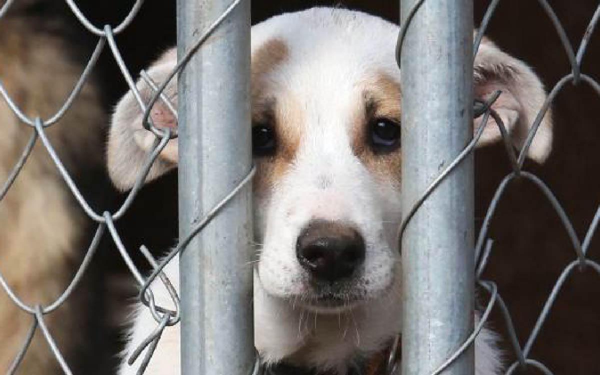Концепцию по обращению с животными в Югре приняли члены окружного правительства в ходе заседания, состоявшегося под председательством губернатора Натальи Комаровой.