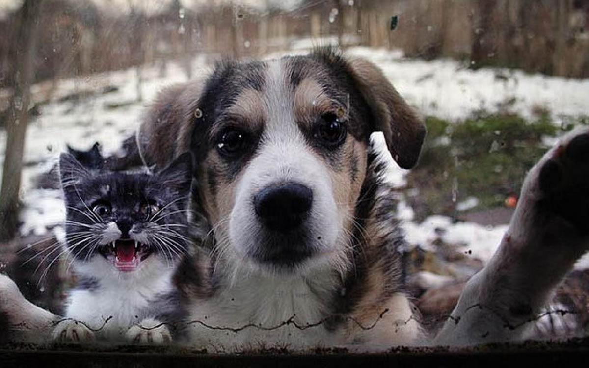 Не бросайте животных на даче! Югорск
