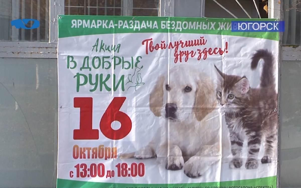 16 октября в Югорске пройдет очередная ярмарка-раздача бездомных животных